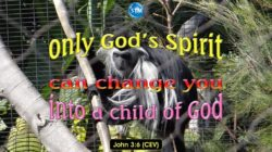 Picture of a colobus monkey for the born again bible study John 3:6