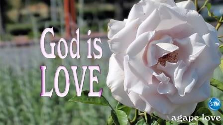 Agape Love - beautiful rose